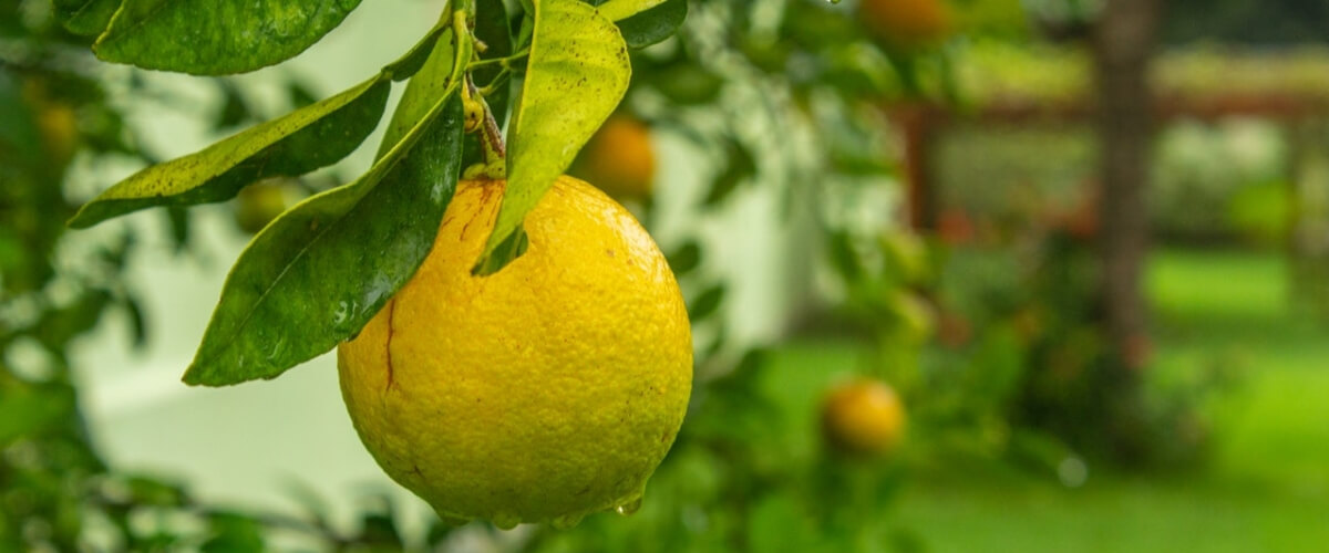 Citrus Mafia, Technology and Growing Asset Values